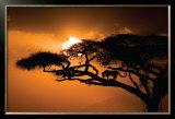 African Sky Print