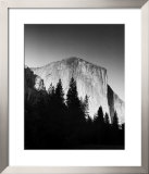 El Capitan in Trees Print by Bradford Smith