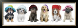 Hat Hounds Prints by Keith Kimberlin
