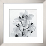 Orchid Spray I Print by Tom Artin