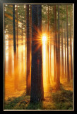 Forest Sunbeams Print