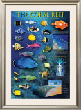 The Coral Reef Posters