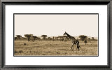 Serengeti Horizons II Prints by Boyce Watt