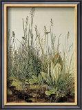 Tall Grass Posters by Albrecht Dürer