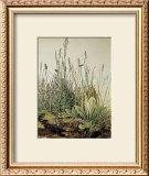 Tall Grass Prints by Albrecht Dürer