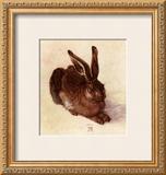 Young Hare Prints by Albrecht Dürer