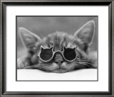 Kool Kat I Prints by David Mcenery