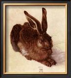 Young Hare Print by Albrecht Dürer