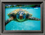 Honu, Turtle Print by Kirk Lee Aeder