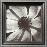 Anemone I Poster by Graeme Harris