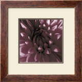Burgundy Dahlia Prints by Shawn Kapitan