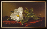 Magnolia Grandiflora Prints by Martin Johnson Heade
