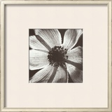 Anemone I Prints by Graeme Harris