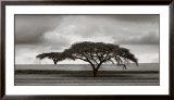 Acacia Trees Print by Jorge Llovet