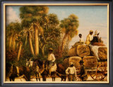 Bringing in the Cotton Posters by William Aiken Walker
