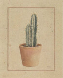 Trichocereus Prints by Laurence David