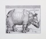Rhinoceros, c.1515 Posters av Albrecht Dürer
