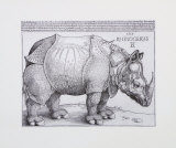 Rhinoceros, c.1515 Prints by Albrecht Dürer