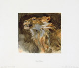 Head of a Lyon Collectable Print by Eugene Delacroix