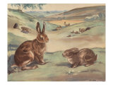 Woffly The Rabbit And Quick Ears The Hare Prints by Eileen Soper