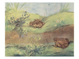 Hoppity-Skip And Crawl About Prints by Eileen Soper