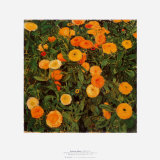 Marigolds Posters by Moser Koloman