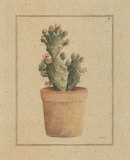 Opuntia Vulgaris Posters by Laurence David