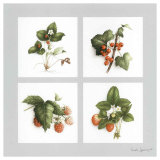 Fruits Rouges Print by Vincent Jeannerot