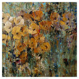 Amber Poppy Field II Prints by Tim