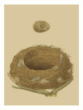Antique Nest and Egg IV Lámina giclée por Reverend Francis O. Morris