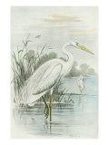 White Heron Premium Giclee Print