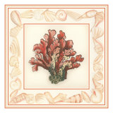Coral with Shell Border IV Giclee Print by Vision Studio 