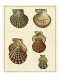 Crackled Antique Shells I Affiches par Denis Diderot