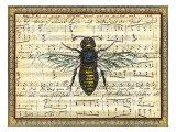 Bumblebee Harmony II Posters