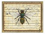 Bumblebee Harmony I Pósters por  Vision Studio