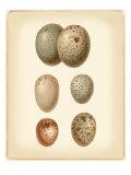Bird Egg Study IV Giclée-Premiumdruck von  Vision Studio