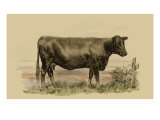 Antique Cow II Premium Giclee Print by Julian Bien