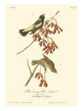 Wandering Rice Bird Prints by John James Audubon