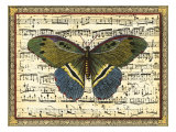 Butterfly Harmony II Prints by  Vision Studio
