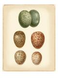 Bird Egg Study V Premium Giclee-trykk av  Vision Studio