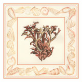 Coral with Shell Border III Premium Giclee Print by  Vision Studio