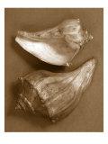 Sensual Shells I Reproduction giclée Premium par Renee Stramel