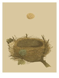 Antique Nest and Egg II Art by Reverend Francis O. Morris