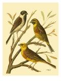 Domestic Bird Family I Prints by W. Rutledge