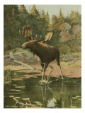 Moose Prints by Oliver Kemp