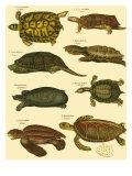 Oken Tortoise Print van Lorenz Oken