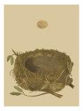 Antique Nest and Egg I Posters par Reverend Francis O. Morris