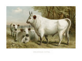 Chillingham Cattle Lámina giclée