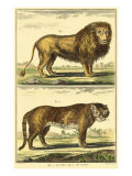 Diderot's Lion and Tiger