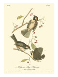 Hudson's Bay Titmouse Reproduction giclée Premium par John James Audubon